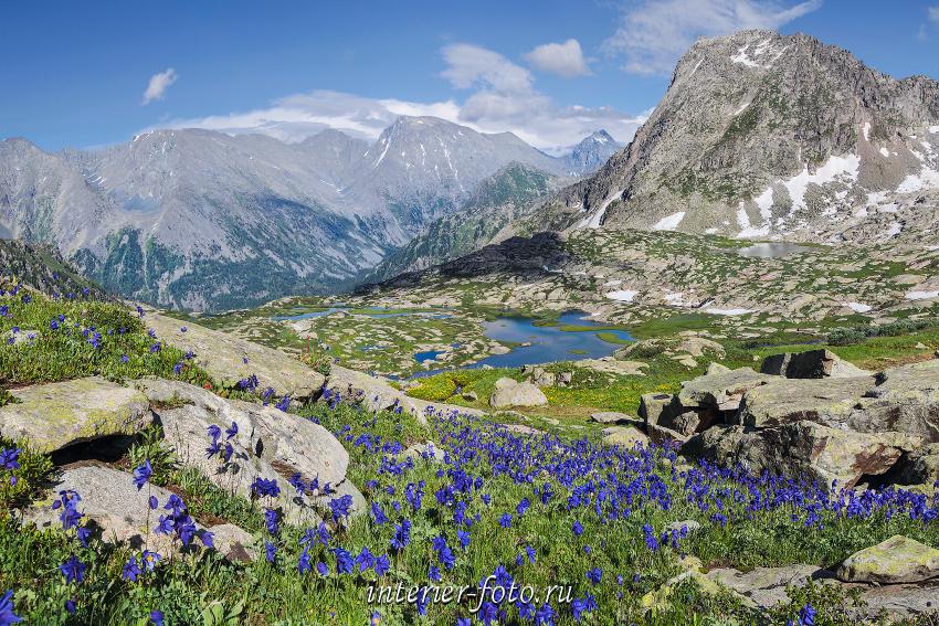 Цветущие горы Алтай