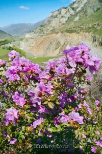 Алтай весной Маральник