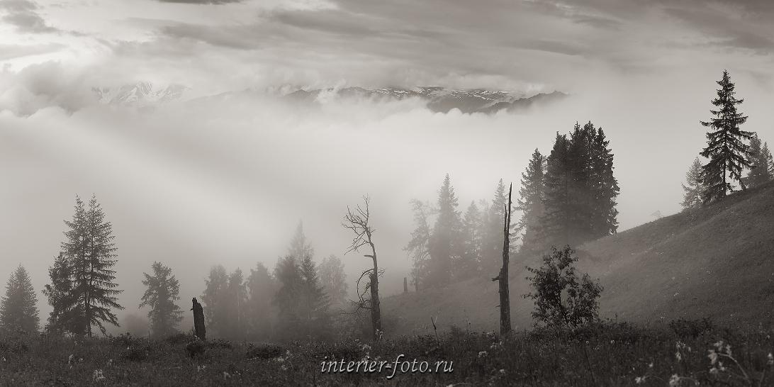 чб фото Туман в горах