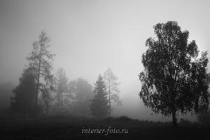 Черно-белое фото Туман