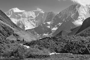 Черно-белое фото Белуха