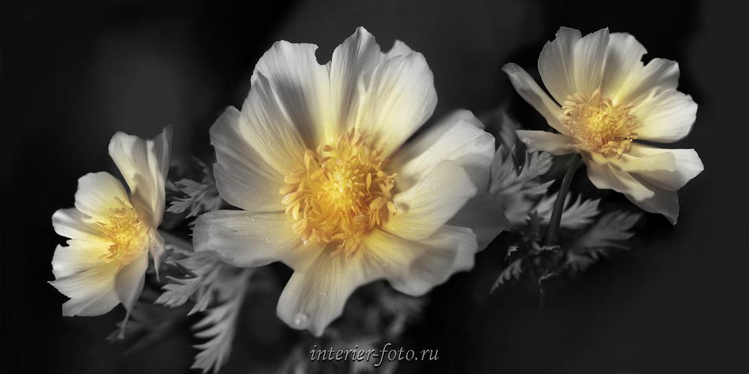 Черно-белые дикие цветы