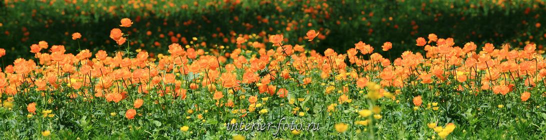Длинные фото Цветы