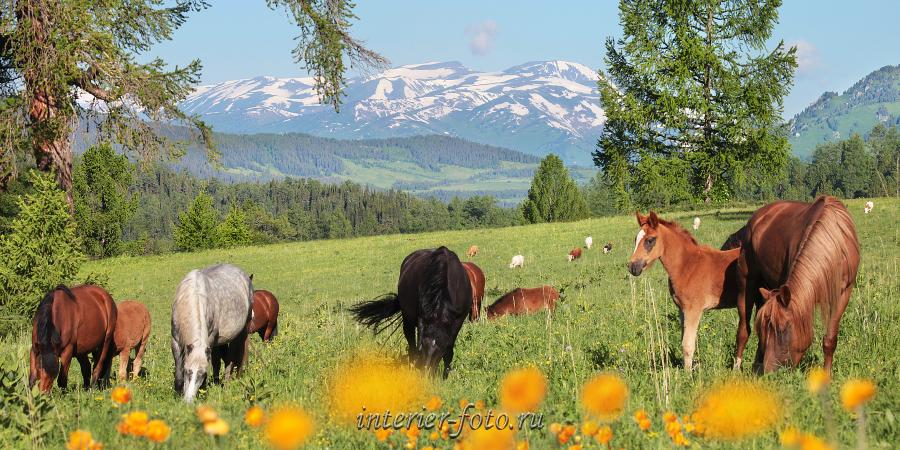 Горы летом Альпийские луга
