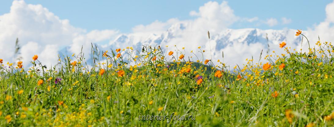 Горы весной Альпийские луга