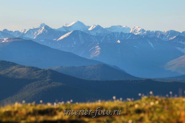 Вершины Северо-Чуйского хребта. Алтай