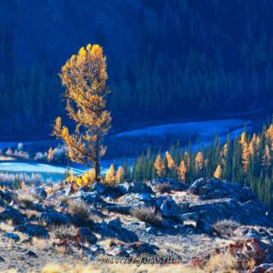 Алтайская осень Курай