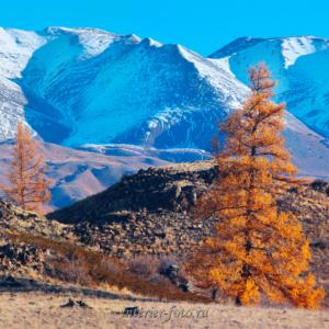 Курайский хребет осенью