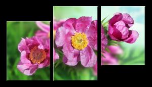 Модульное фото - цветы