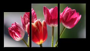 Модульное фото Тюльпаны