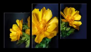 Модульное фото Цветы