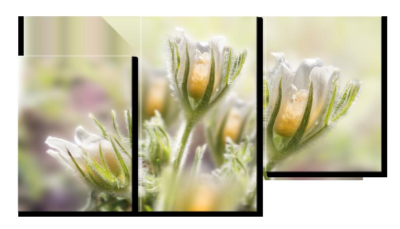 Модульное фото Цветы Подснежники