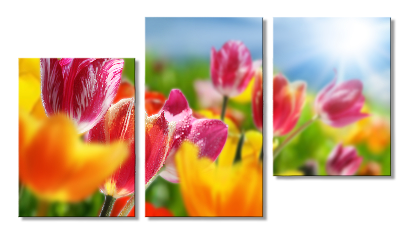 Модульная фотокартина Тюльпаны