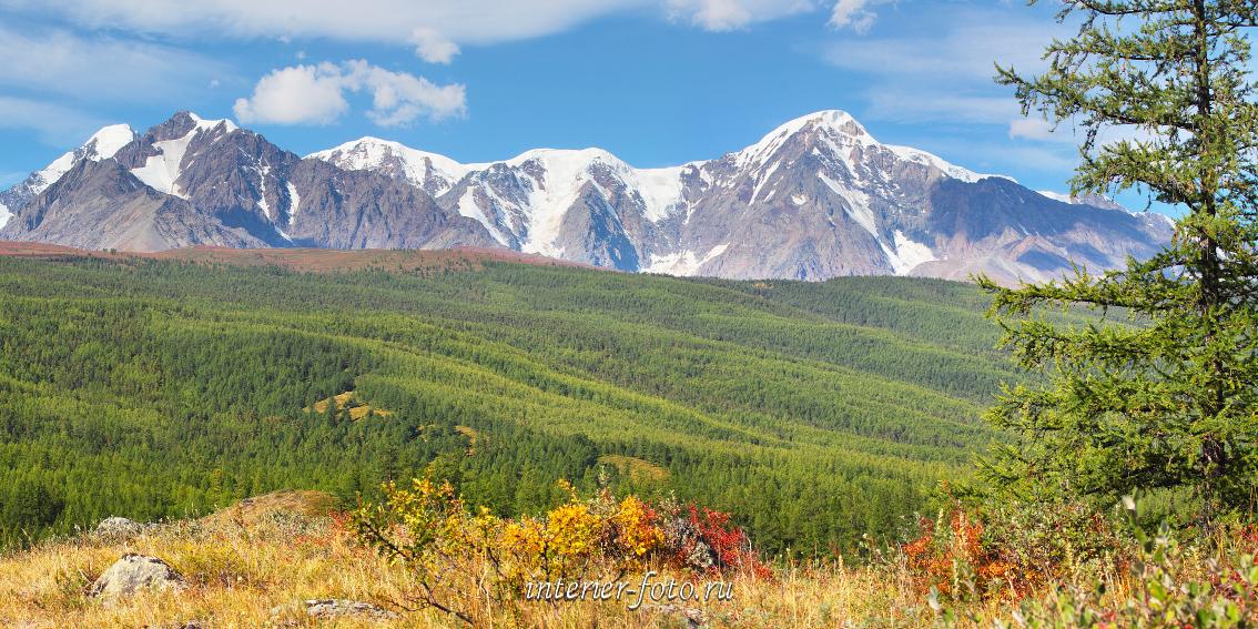 Панорама Северо-Чуйский хребет