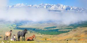 Панорама Лошади на фоне гор