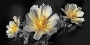 Панорамная фотография Цветы