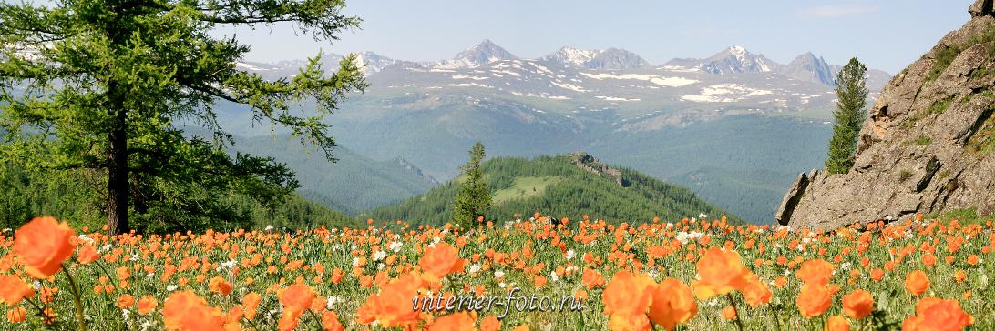 Панорама цветущих гор