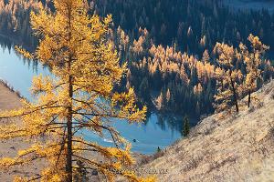 Осенняя Чуя Алтай