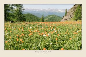 seriya-fotografij-1380