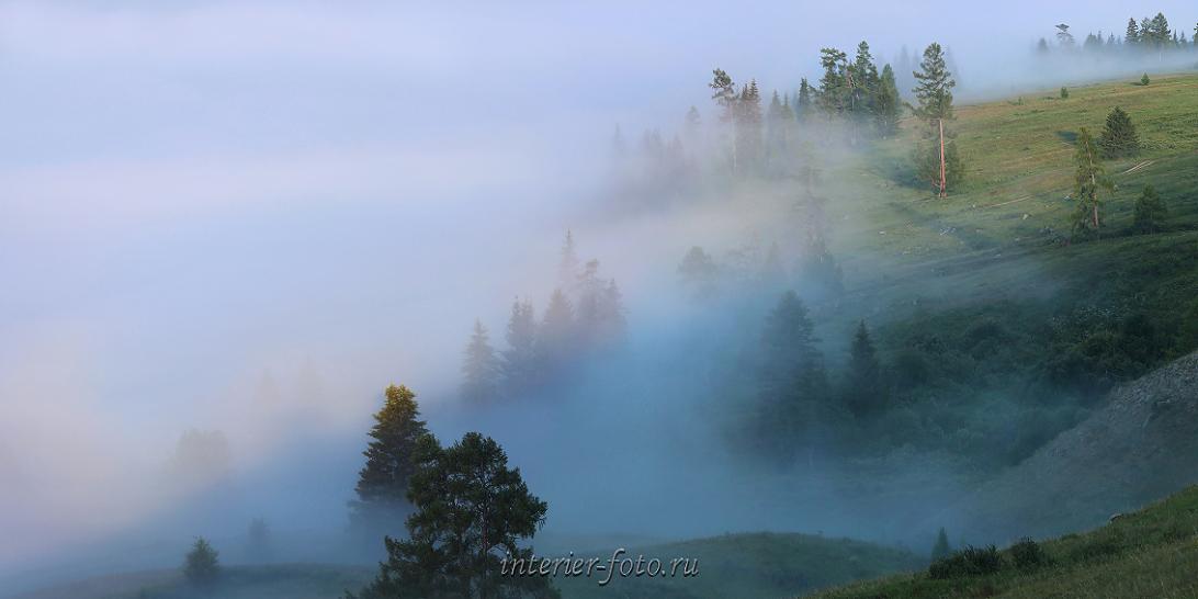 Туманные дали Тайга