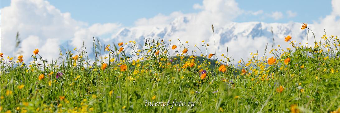 Весенние виды Горы