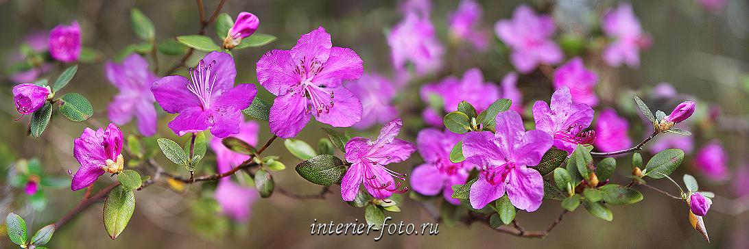 Выставка фотографий Цветы