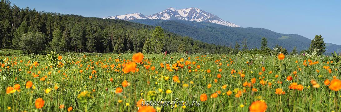Живописный пейзаж Весна в горах